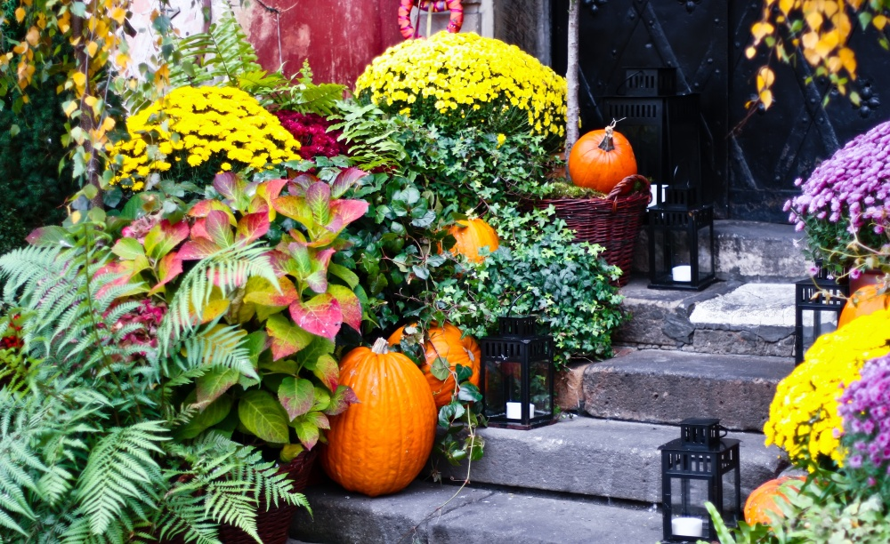 fall-walkway-with-pumpkins